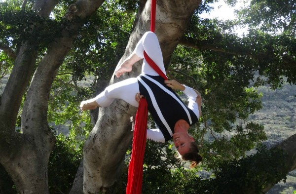 Shelley-Budding Aerialist
